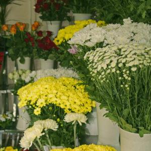Cvjećara Tamaris